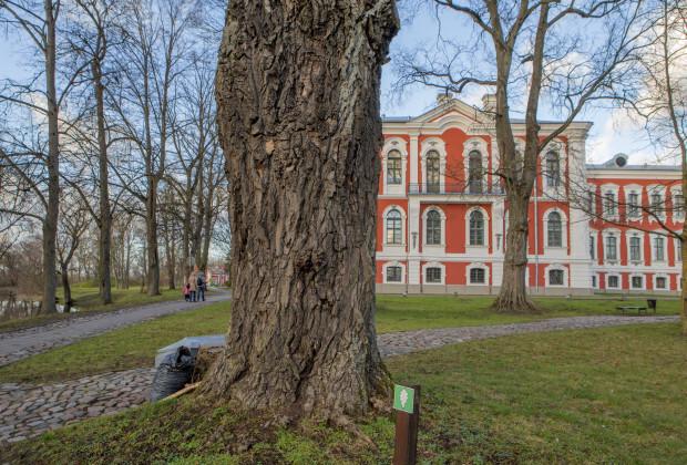 Jelgavā un Rēzeknē darbu sāks Covid-19 analīžu pieņemšanas punkts