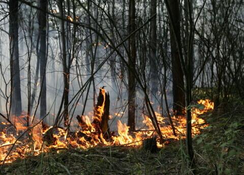Slīteres Nacionālajā parkā izcēlies meža ugunsgrēks