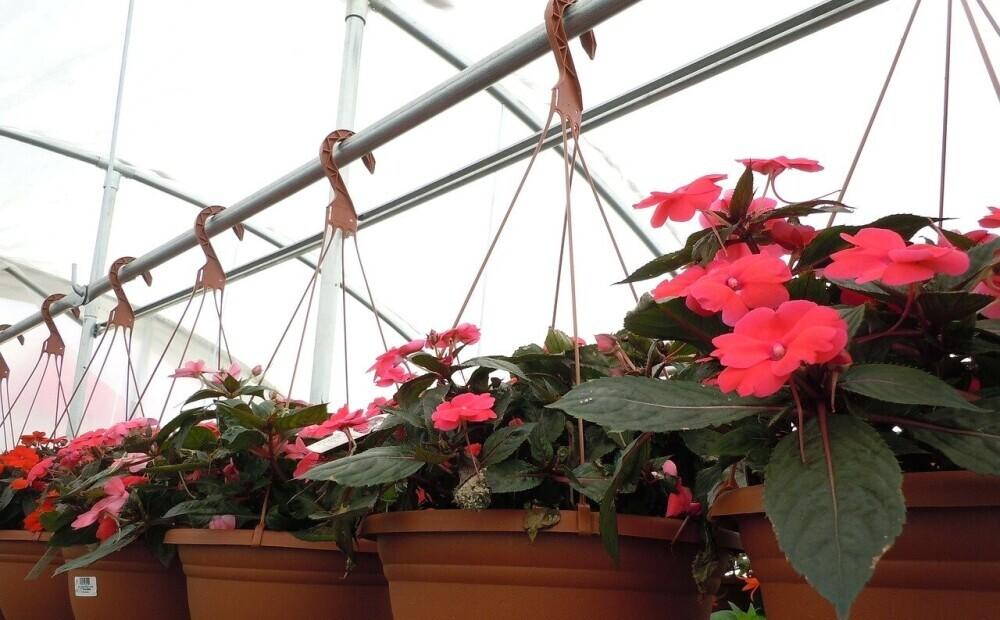 Gribu vasaras puķes iekaramajos podos. Kā izvēlēties pareizi?