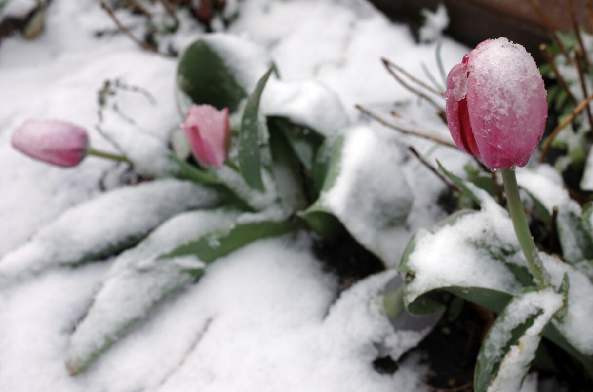 Maijs Latvijā bijis aukstākais šajā gadsimtā