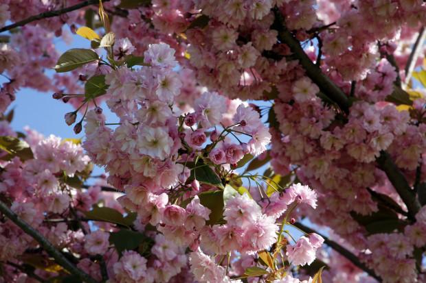 Maijs līdz šim bijis krietni vēsāks par normu; vidējā gaisa temperatūra vien ap +7 grādiem