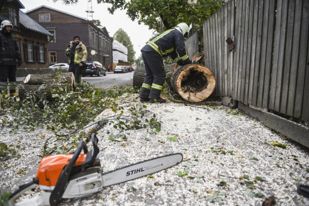 Varakļānos stiprā vēja dēļ koks uzkritis cilvēkam, kurš gājis bojā